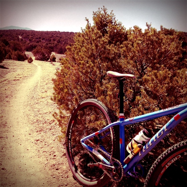 some wide open singletrack featured on the race course